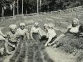 Práca v lesnej škôlke